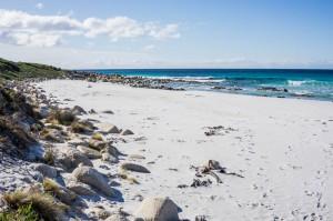 6 East Coast of Tasmania-153